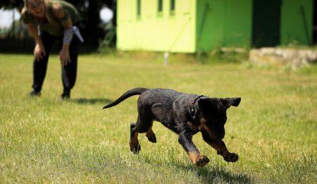 Tu perro en forma!